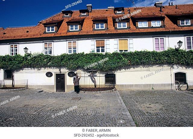 400-year-old vine, Maribor, Slovenia