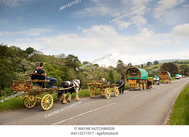 Horse drawn caravans heading towards the horse fair at Appleby in Westmorland along the A683 between Sedbergh and Kirkby Stephen