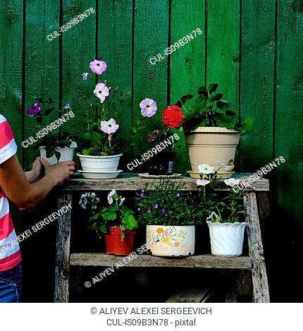 Woman arranging flower pot on rack