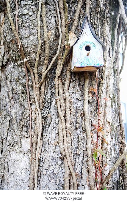 Bird house on a tree, Jacksonville, Florida