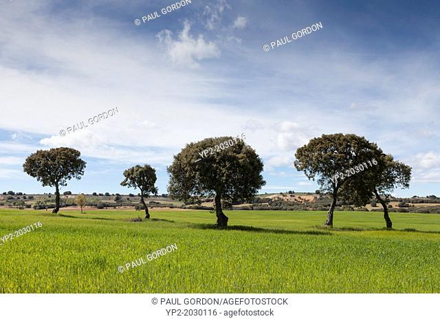 Pastoral farmland of the Meseta Central in Burgos Province - Castile and León, Spain
