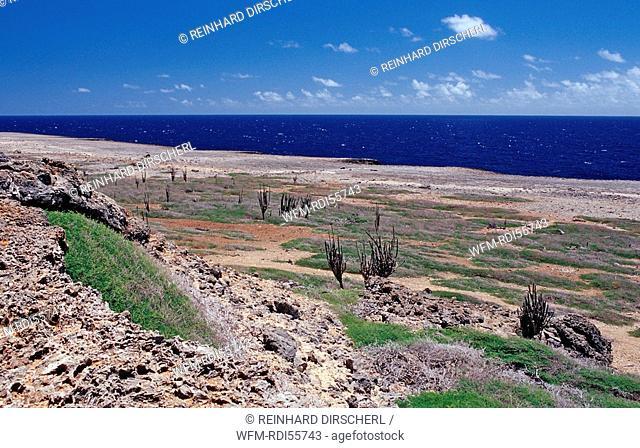 Desert landscape, Bonaire, Washington Slagbaai National Park, Netherlands Antilles, Bonaire