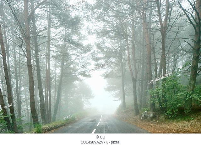 Landscape and misty forest road, Gourdon, Alpes Maritimes, France