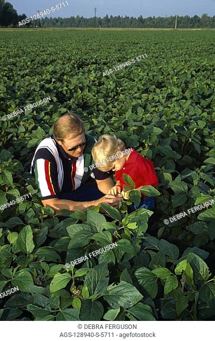 Agriculture - A farmer in his soybean field inspecting his crop with his young son / Mississippi, USA MR