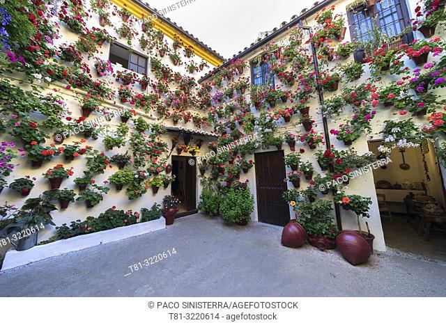Andalusian patios, covered with flowers, Cordoba, Andalusia, Spain