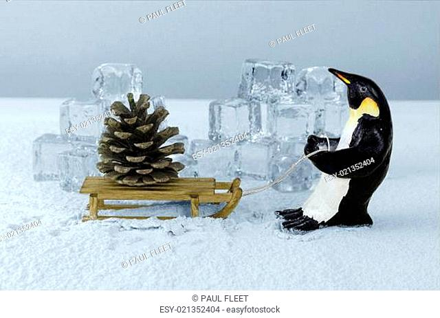 Penguin and fir cone