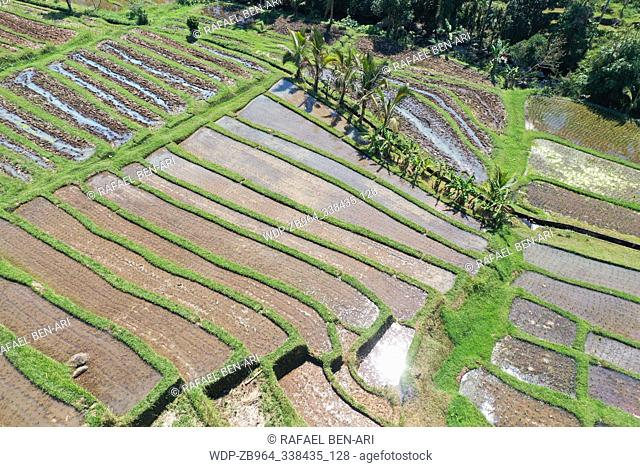 Rice field in Jatiluwih rice terraces in Bali Indonesia. Aerial point of view drone