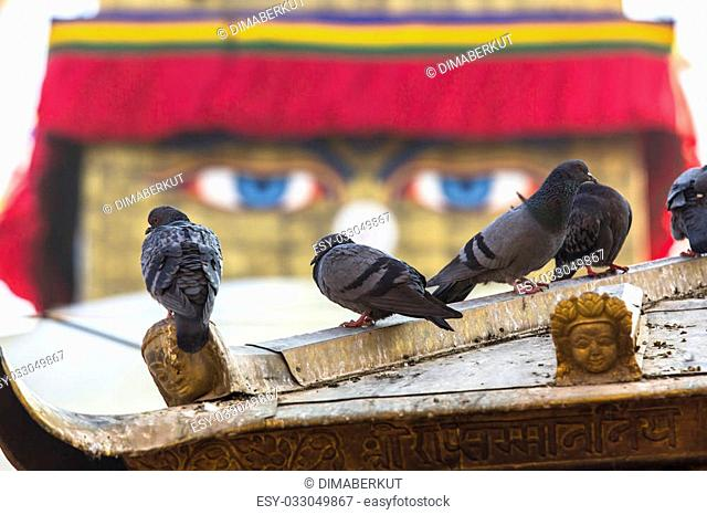 Pigeons and Boudhanath stupa in background - symbol of Nepal