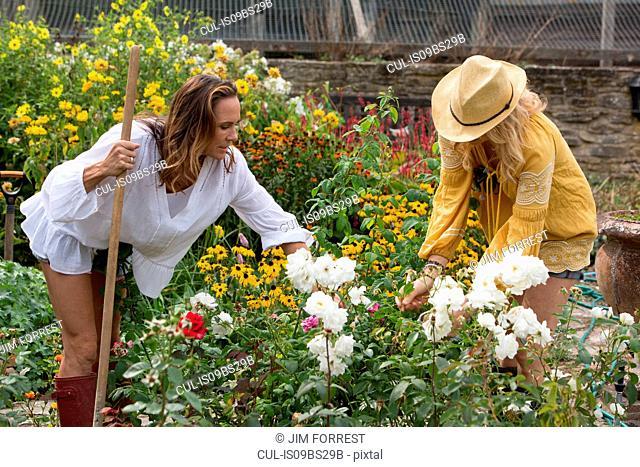 Women working on garden