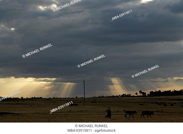 Ethiopia, highland, field-landscape, shepherds, cows, cloudy-mood, Africa, East-Africa, landscape, fields, people, men, drives stockmen, cows, sunset, clouds
