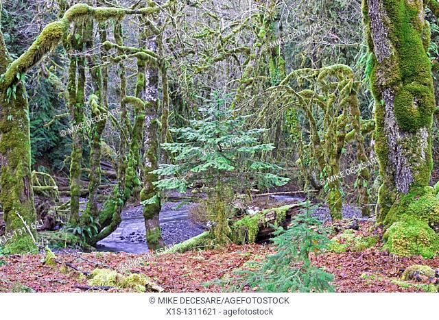 Rain Forest Glade