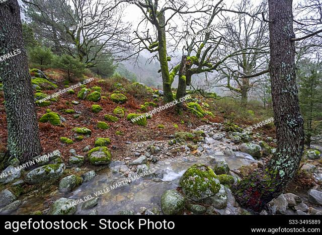 Strem, rocks and oaks with moss and pines at Graja gorge. Sierra de Gredos. Avila. Spain. Europe