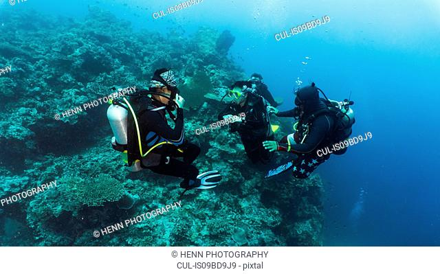 Group of divers performing mandatory safety stop, underwater view, Tubbataha Reefs Natural Park, Cagayancillo, Palawan, Philippines