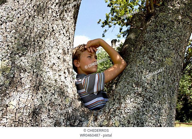Side profile of a boy on a tree
