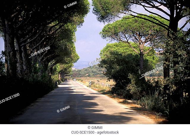 Road, Parco della Maremma, Alberese, Tuscany, Italy