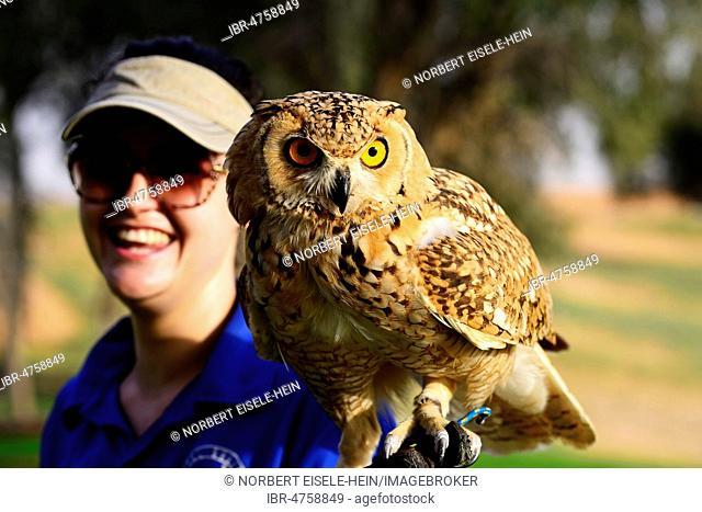Falconer holds Eagle Owl at Al Wadi Desert Hotel, Ritz Carlton, Ras al Khaimah, United Arab Emirates