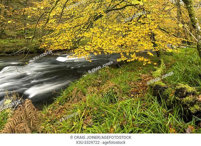 Autumn colour at the River Barle in Exmoor National Park near Dulverton, Somerset, England