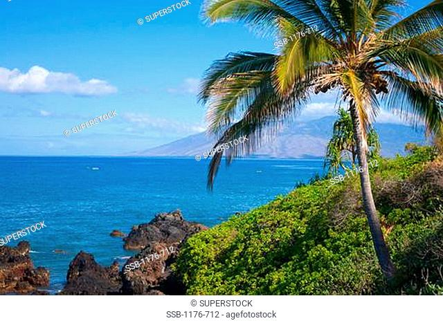 Palm tree on the coast, West Maui Mountains, Wailea, Maui, Hawaii, USA
