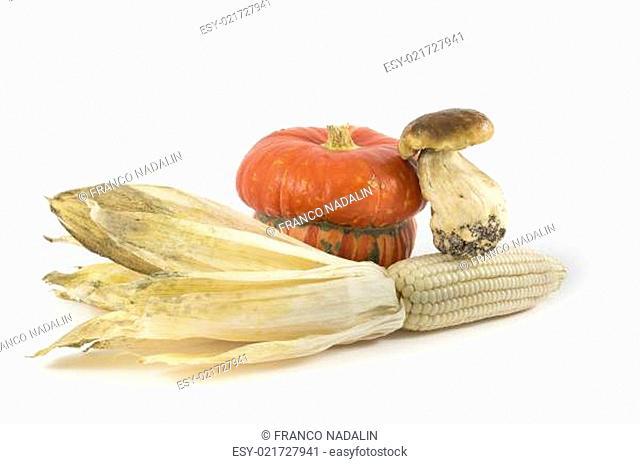 Pumpkin, mushroom, corn on white background