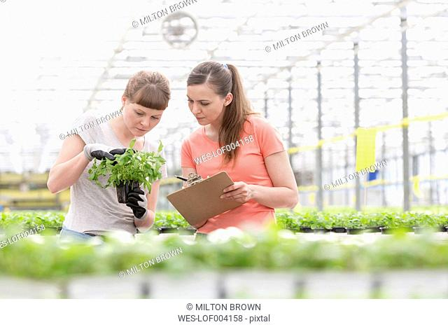 Two women in greenhouse examining plants
