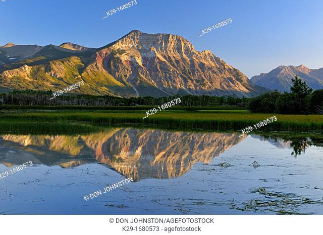Maskinonge Ponds with reeed beds and reflections of Vimy Ridge, Waterton Lakes National Park, Alberta, Canada