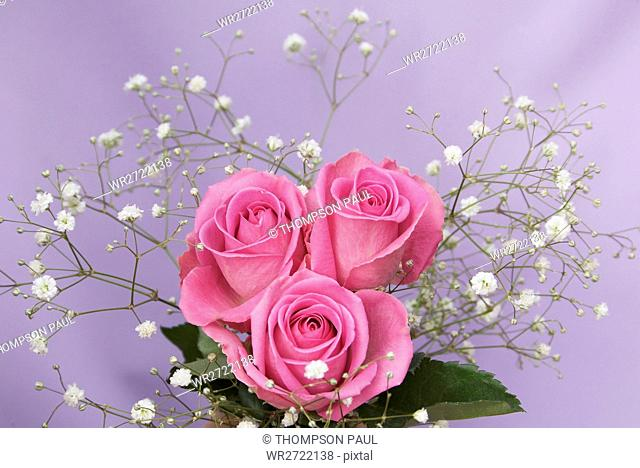 90900135, Posy of Pink Roses and Gypsophila, bouqu