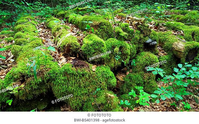 moss.covered rotten stock of logs at a forest path, Germany, Baden-Wuerttemberg, Odenwald