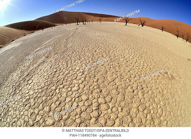 View of the dried ground of the clay pan in Dead Vlei, taken on 01.03.2019. The Dead Vlei is a dry, surrounded by tall dune clay pan with numerous dead acacia...