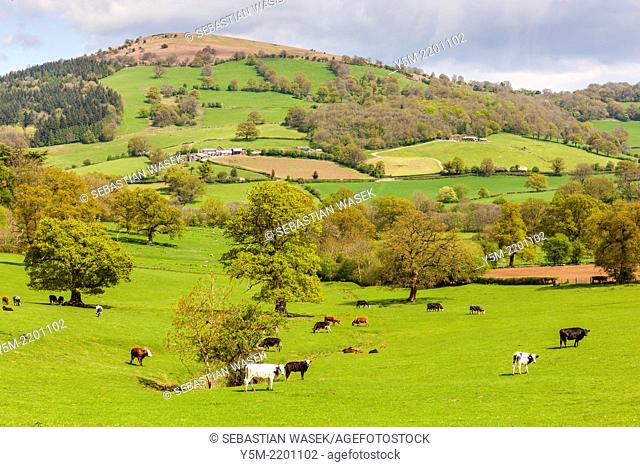 Green fields in Monmouthshire, Wales, United Kingdom, Europe