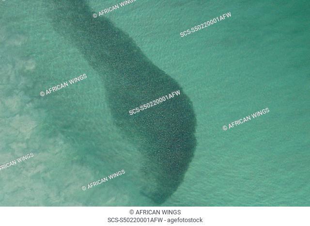 Sardine Run The Cape, South Africa