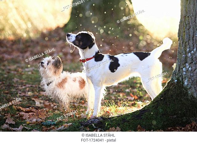 Dogs standing by trees in forest during sunny day