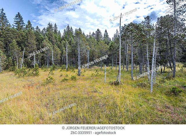 raised bog of Hinterzarten, Germany, Southern Black Forest Nature Park, untouched nature