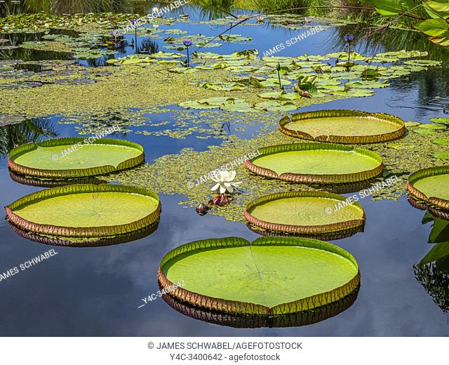 Naples Botanical Garden in Naples Florida in the United States