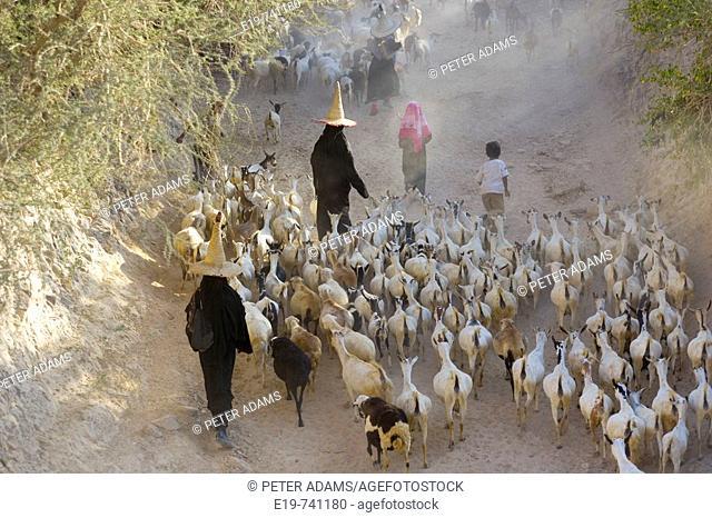 Goat herder. Al Wadi Dawan nr Wadi Hadhramawt, Yemen