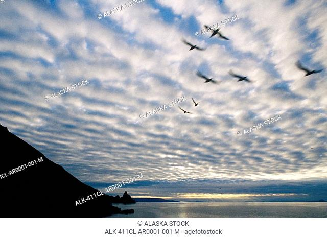 Birds flying against clouds Round Island Southwest Alaska summer scenic