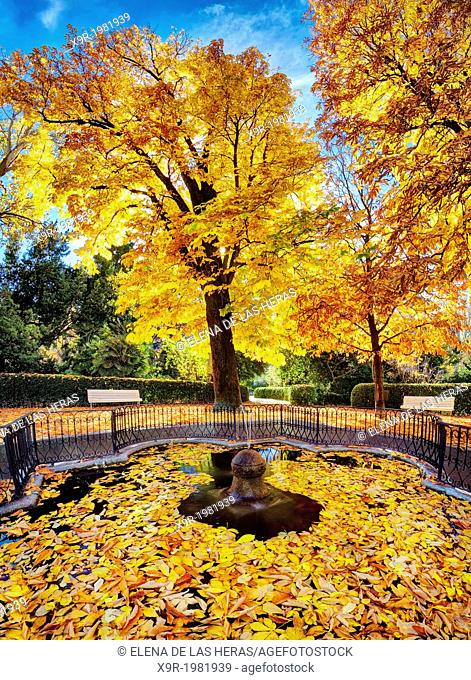 Autumn fallen leaves from a conker tree (Aesculus hippocastanum) in a fountain at the Royal Botanical Garden. Madrid. Spain