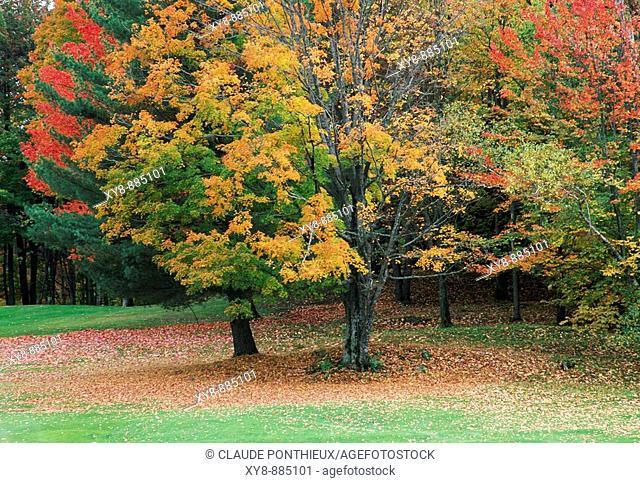 Trees-Autumn-Colors