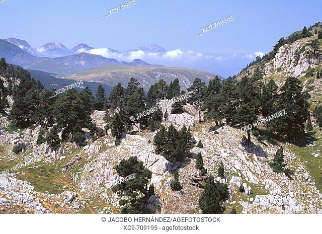 Larra Belagua Natural Reserve. Roncal Valley. Pyrenees Mountains. Navarra. Spain