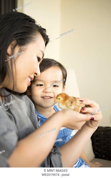 Smiling woman holding a tiny chick in her hands, her young son watching