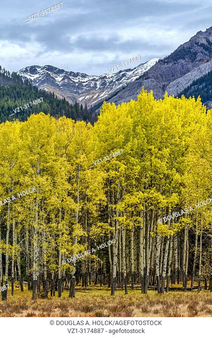 Bow Valley Parkway Fall Aspen in Banff National Park Alberta Canada
