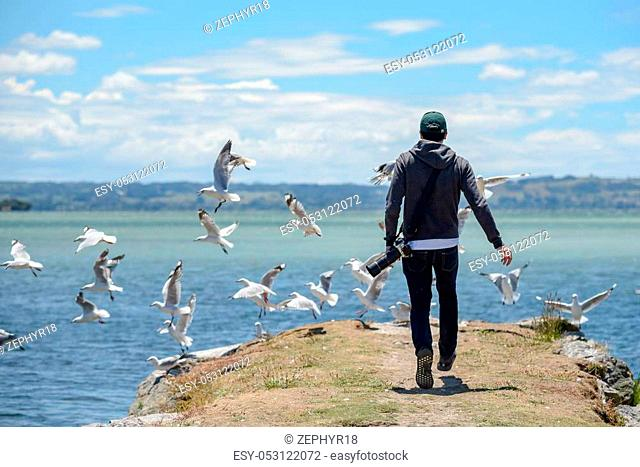 Young male photographer chasing group of seagull birds near Lake Rotorua in North Island of New Zealand, travel in summer season