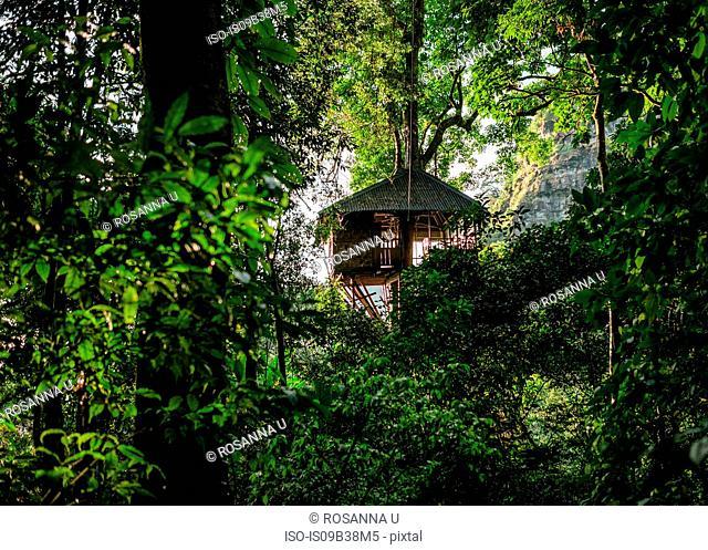 Treehouse, Ban Nongluang National Park, Champassak province, Paksong, Laos