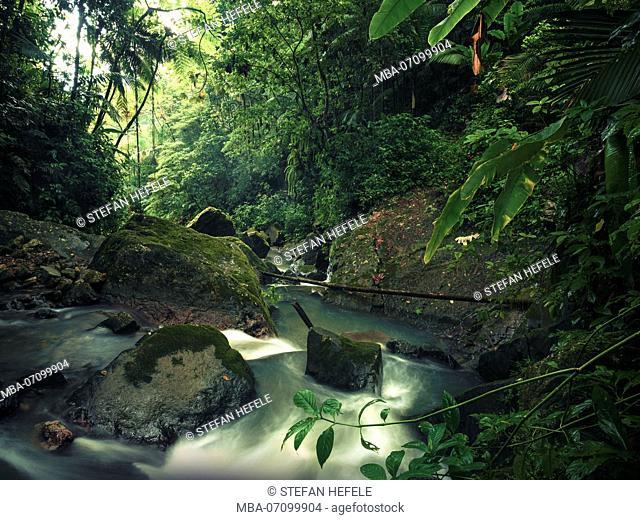 Jungle scene on the Caribbean island