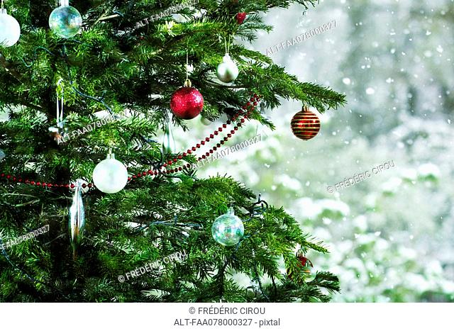 Christmas tree, close-up