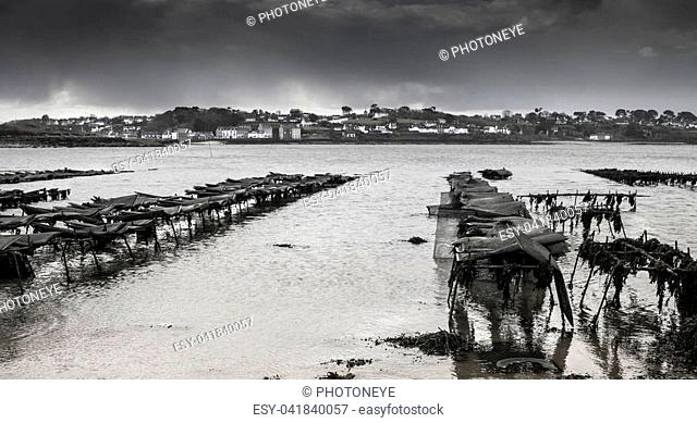 Oyster farm in low tide in Britanny, Lilia, France on a stormy day