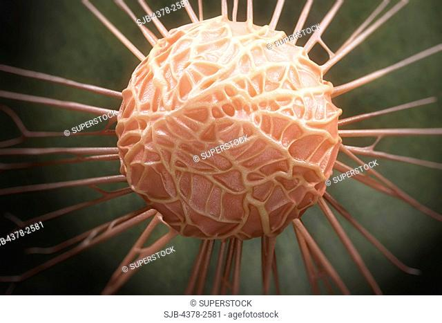 Close up view of a single breast cancer cell