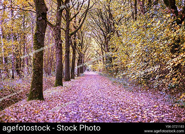 Tilburg, Netherlands. A Forrest hiking path inside Moerenburg Park during fall season