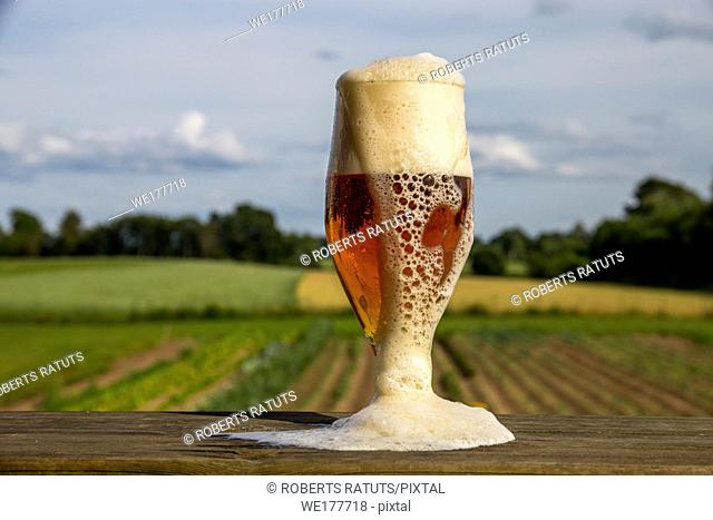 Glass of light beer with foam and bubbles on wooden table on summer landscape background. Beer is an alcoholic drink made from yeast-fermented malt flavoured...