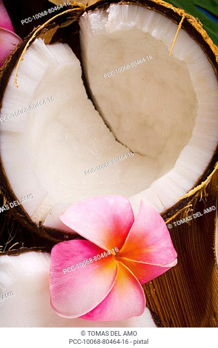 A coconut in halves, white meaty fruit with flowers