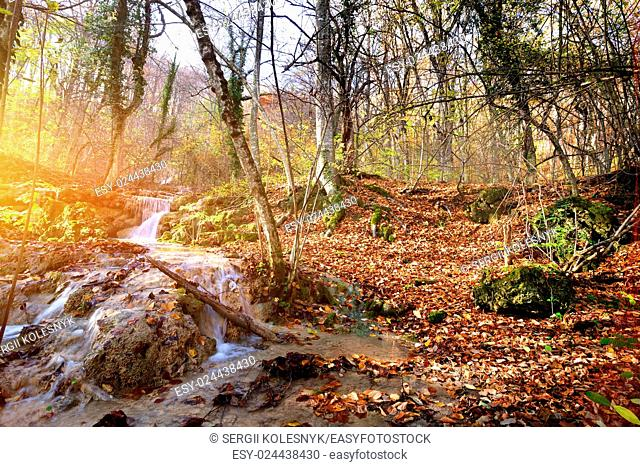Creek in autumn mountain forest at sunrise